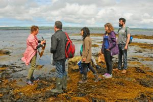 Oonagh O'Dwyer - Foraging - Properfood.ie