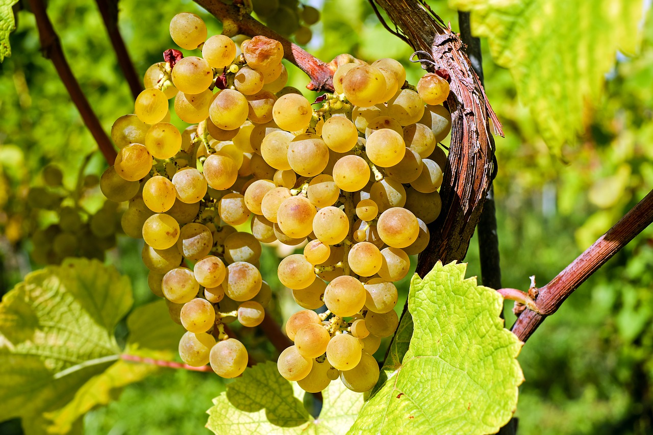 Natural Wines: What's All The Fuss About?